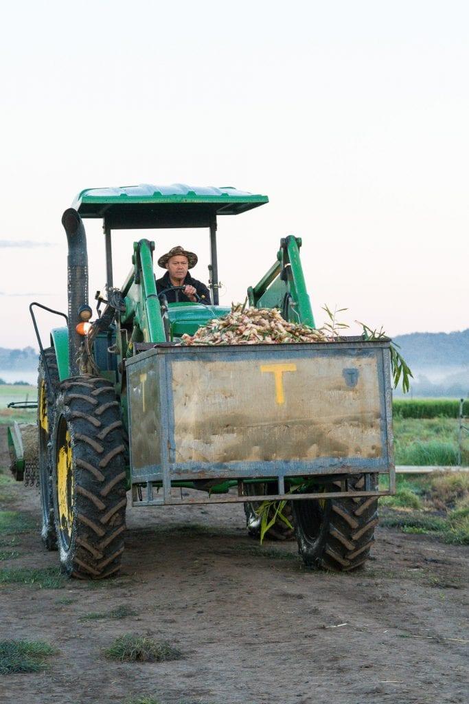 Ginger Harvest Hi Res 23